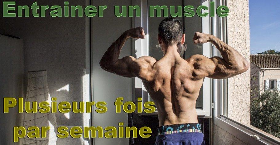 entrainer un muscle par semaine